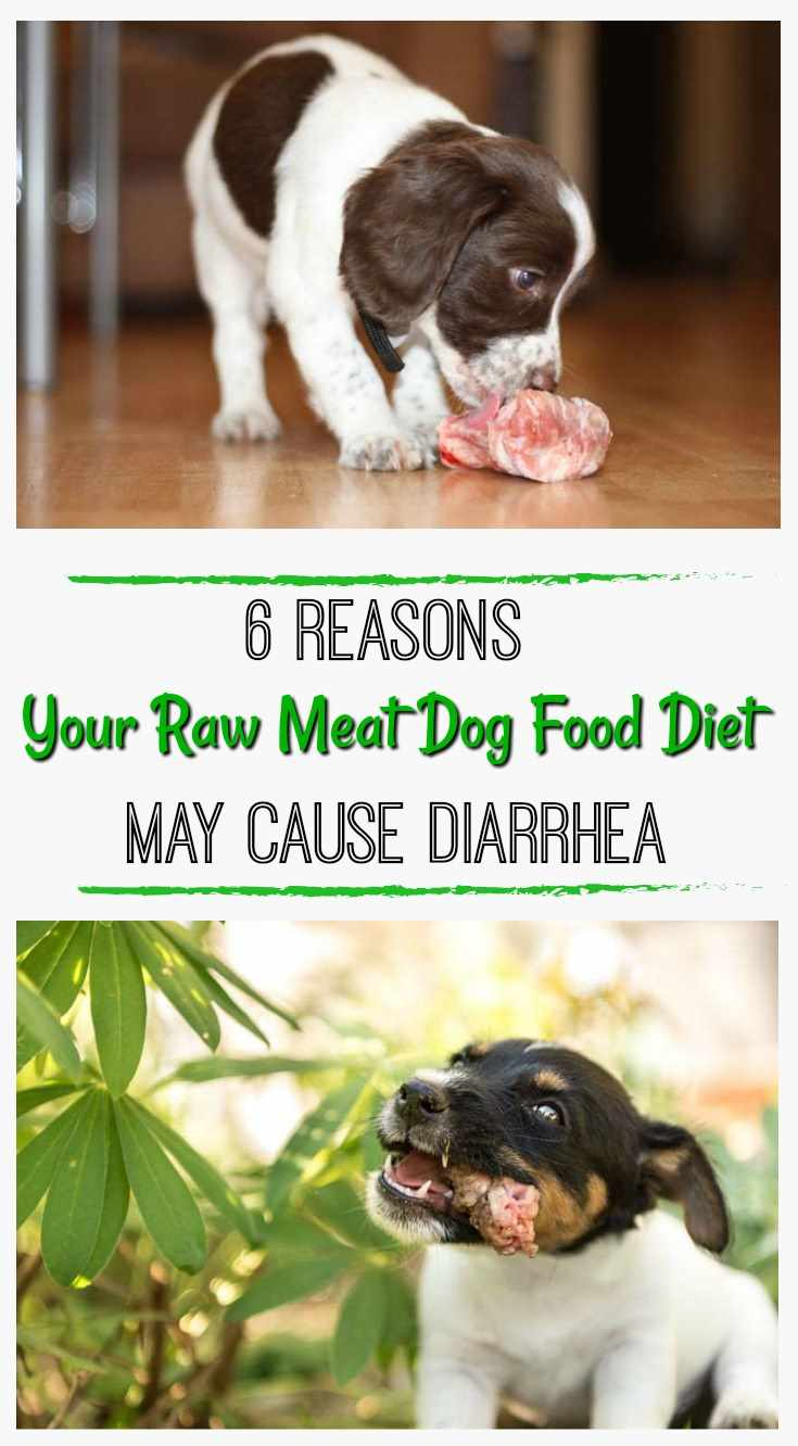 Natural Reasons Your Raw Meat Dog Food Diet May Cause Diarrhea Pin Reasons Your Raw Meat Dog Food Diet May Cause Diarrhea Bone Meal Dogs Dogs Pet Bone Diet houzz 01 Bone Meal For Dogs