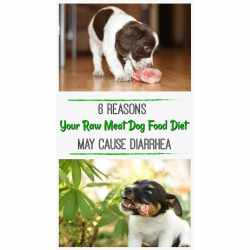 Small Crop Of Bone Meal For Dogs