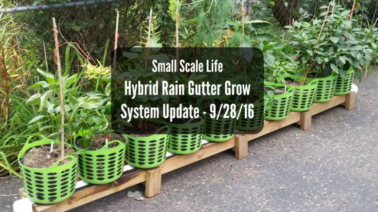Hybrid Rain Gutter Grow System; peppers; hydroponics; Larry Hall; Grow Bag Garden System; dill; herbs; jalapenos; wicking beds
