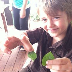 Harvest to Home at Greenleaf Chopshop