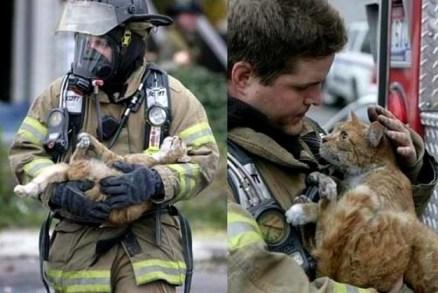 cat rescue!