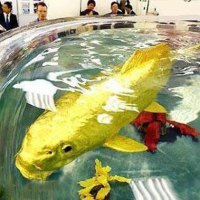 A Real GoldFish [Truly Unbelievable]