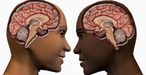 male-female-brain11