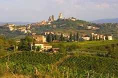 Town and Vineyards in Italy