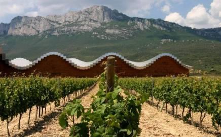 Modern Winery in Vineyard