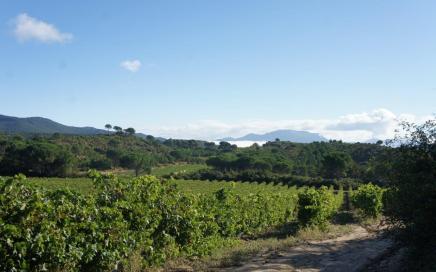 Riojan vineyards