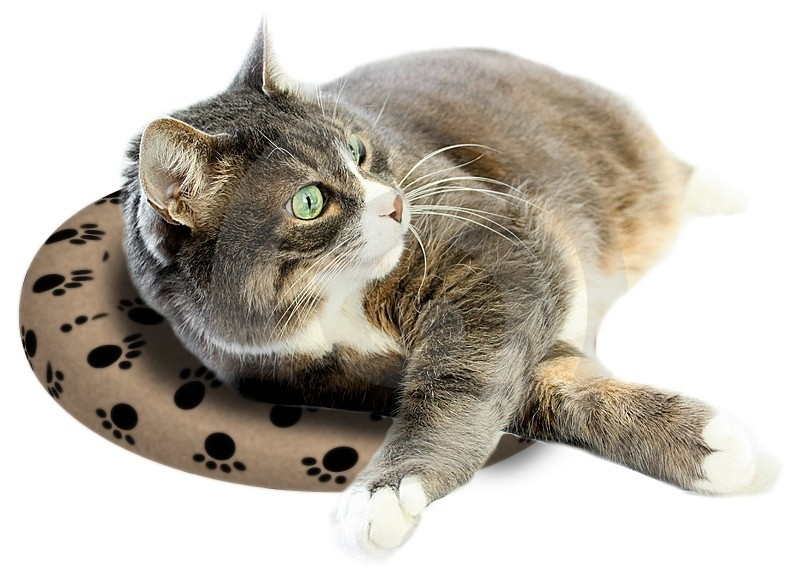 Cat on SnuggleSafe heatpad