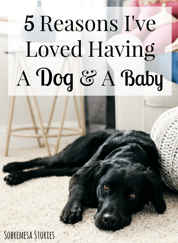 If you're nervous about having a dog and a baby, this post will help ease your mind! A must read for any expecting parents who are nervous about the transition to baby for their pet.