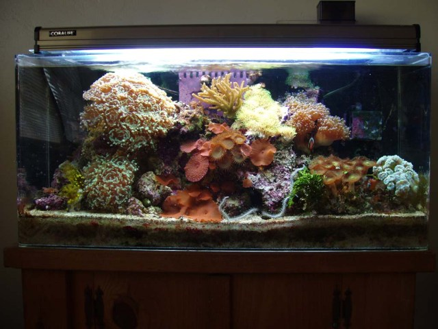 20 Gallon Reef Tank   updated 10/06/05   Tank is 2 years, 1 month old.