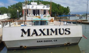VIDEO: Chasing Cows On The Maximus