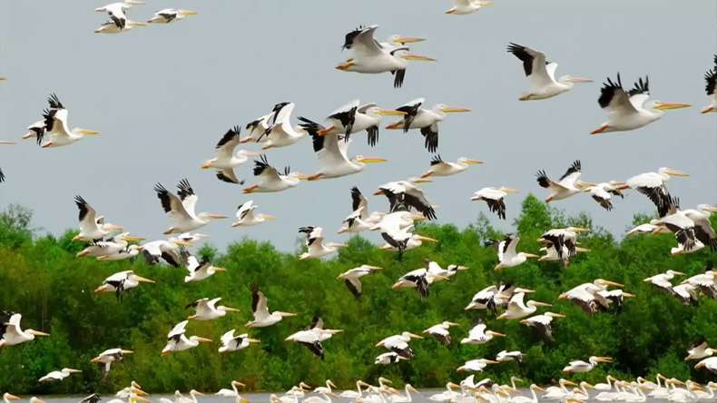 Birds Of 11 Rare Species Found in Jharkhand