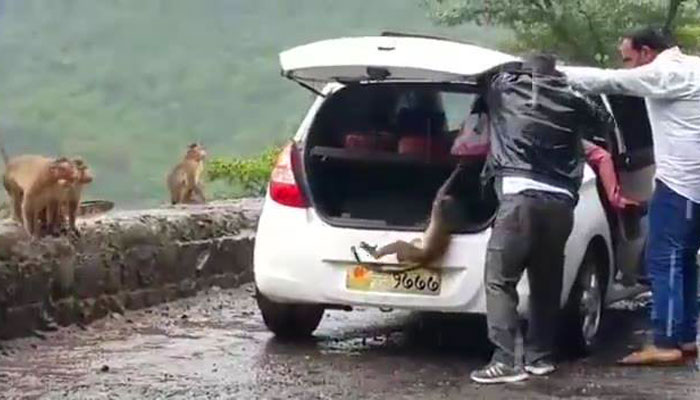 This Little Monkey Was Kidnapped From Highway. Now Internet Has Brought It Back Home