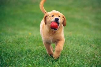 mejores perros para correr