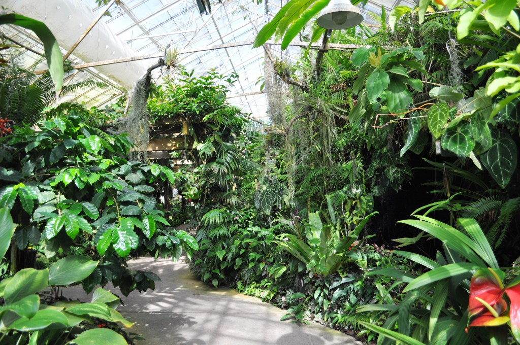 Wordless Wednesday Stroll Through Marie Selby Botanical