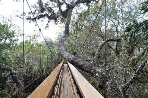 Canopy Walk at Myakka River State Park, Sarasota, Fla.