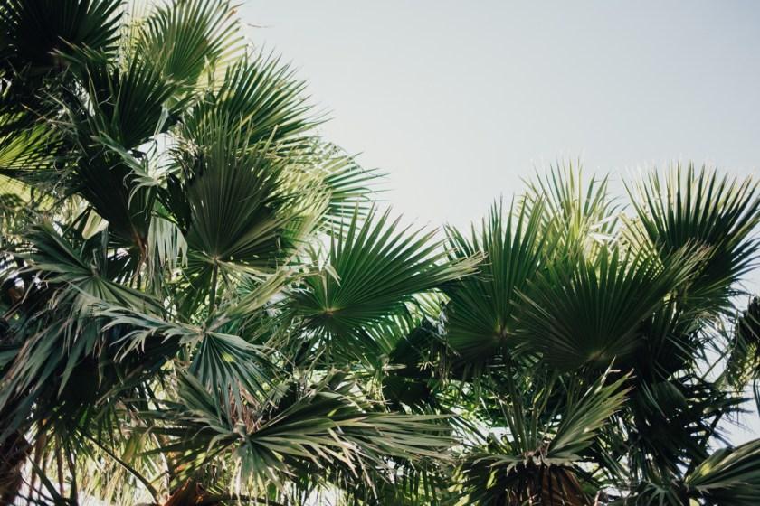 Something Sakura: Palm Tree Farm