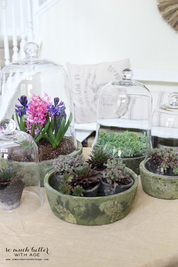 Spring flowers in terrariums | somuchbetterwithage.com