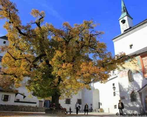 Hohensalzburg-lime-tree-courtyard-001-1024x682