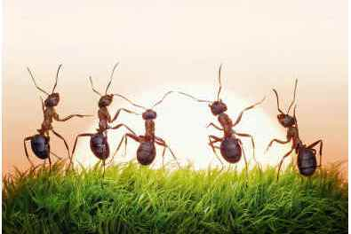 how-long-do-ants-live