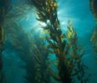 Las algas ayudan a combatir la suciedad en los dientes