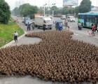 5000 patos