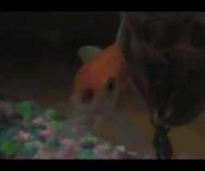 goldfish rapping