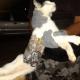 Gato intentó ingresar sierras y teléfono a cárcel... es capturado por la policía