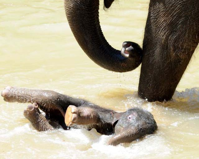 mama_hijo_elefantes_4