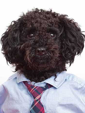perros_camisas_1