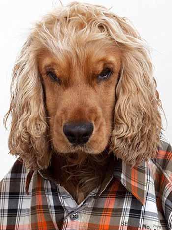 perros_camisas_3