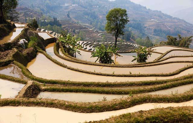 campo_arroz_chino_10