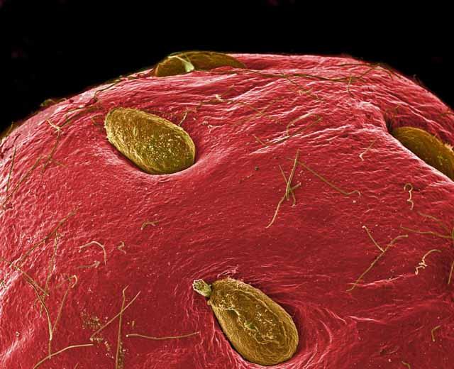 microscopio_fresa_