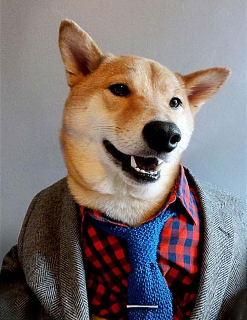perro_mejor_vestido_2