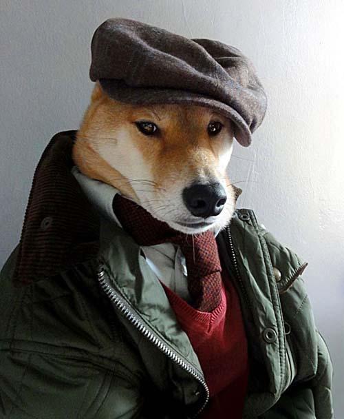perro_mejor_vestido_3