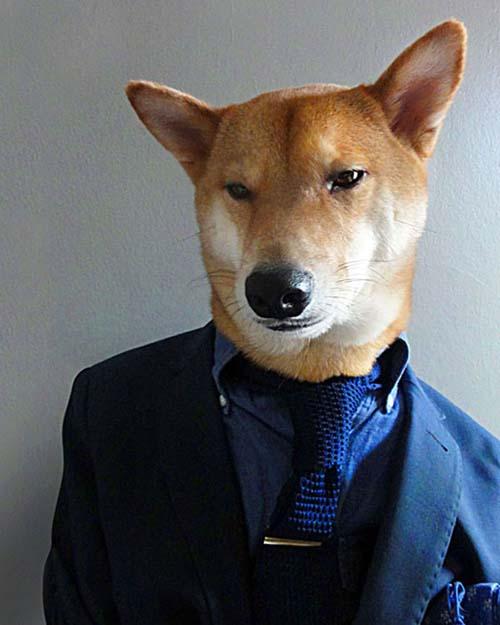 perro_mejor_vestido_6