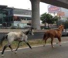 Y en la imagen del día...  2 caballos sueltos ¡en Periferico!