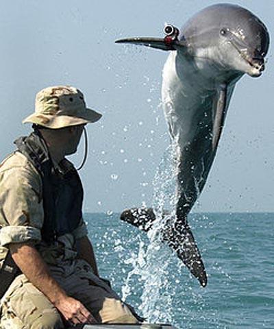 delfin_armado_2