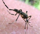 Secretaría de Salud confirma 14 casos de Chikungunya en México