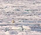 Galería: La cada vez más difícil vida del oso polar