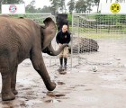 Video: Elefante pronostica que el Bayern Munich será campeón de la Champions League
