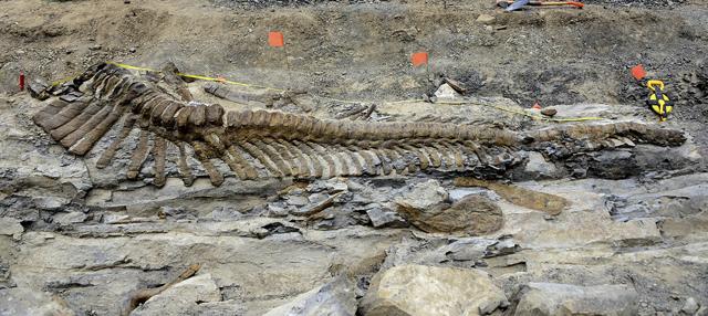 cola dinosaurio mexico