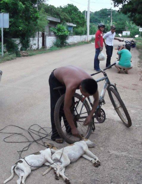 mata perros yucatan
