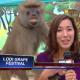 Un mono sabroseó a una reportera en plena entrevista
