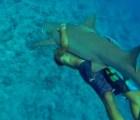 Favor de no abrazar a los tiburones