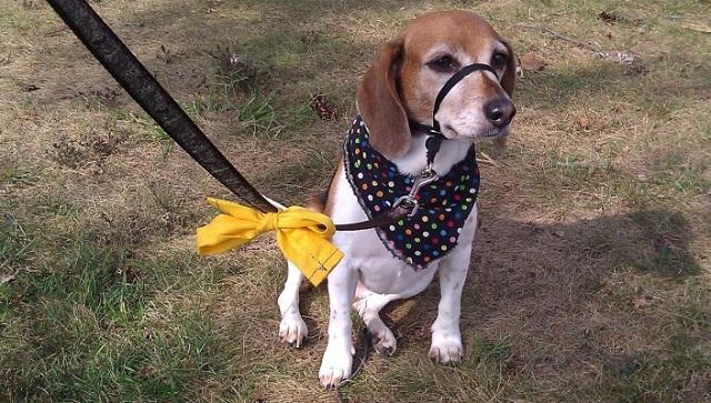 Perros amarillos01