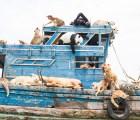Galería: al arca de Noé hecha arte para luchar contra la extinción