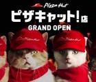 Amantes de gatos y pizzas... tienen que ver estos comerciales