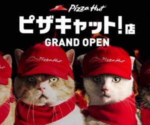 pizza gatos