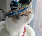 Awwww Ternuringa muy mexicanoooo!!!! :D