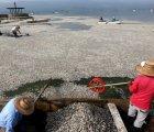 Revelan qué provocó muerte de toneladas de peces en Jalisco; nuevo ecocidio, ahora en Mazatlán